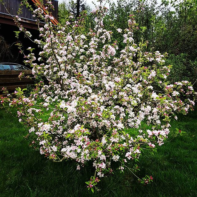 #appletree has #spring mode enabled
